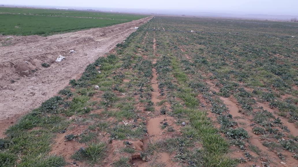 زمین کشاورزی هکتار بالا